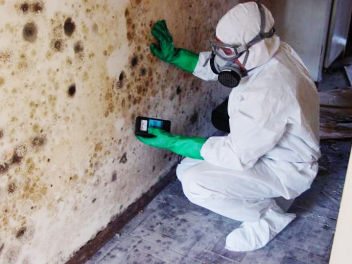 Austin Mold Remediation Contractor